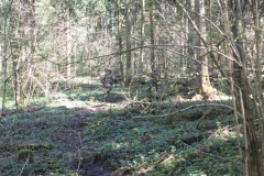 Waldspiel_16042016 (111)