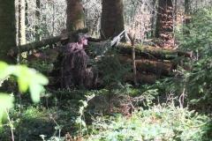 Waldspiel_16042016 (113)