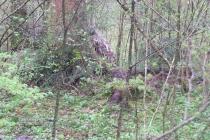 Waldspiel_16042016 (13)