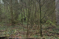 Waldspiel_16042016 (165)