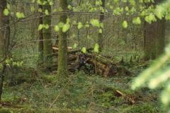 Waldspiel_16042016 (170)