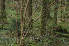 Waldspiel_16042016 (174)