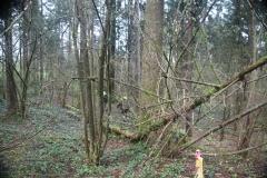 Waldspiel_16042016 (186)