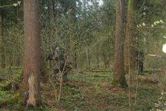 Waldspiel_16042016 (195)