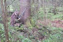 Waldspiel_16042016 (22)