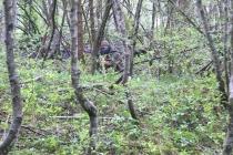 Waldspiel_16042016 (44)