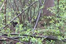 Waldspiel_16042016 (46)