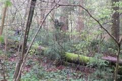 Waldspiel_16042016 (63)