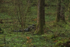 Waldspiel_16042016 (194)