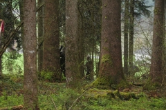 Waldspiel_16042016 (213)
