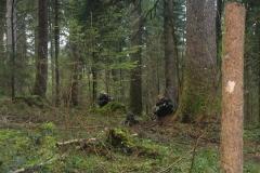 Waldspiel_16042016 (224)